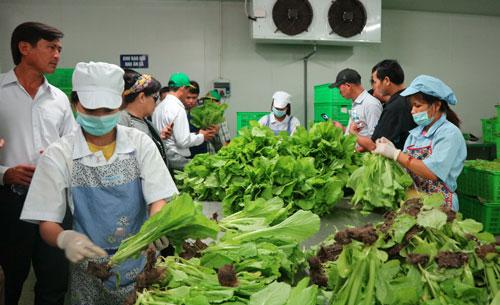 An toàn thực phẩm để nông nghiệp tham gia chuỗi giá trị toàn cầu